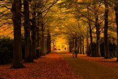 Autumn colors in the forest. Beautiful autumn colors in the forest Stock Photos