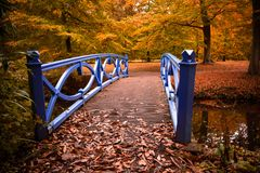 Autumn colors in the forest Stock Photos