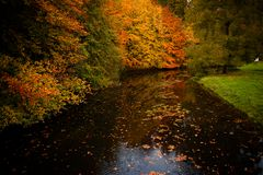 Autumn colors in the forest Stock Photography
