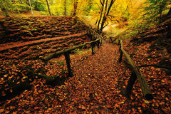 Autumn colors in the forest Royalty Free Stock Images
