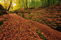 Autumn colors in the forest Stock Image