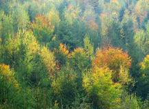Autumn colors in the forest. This picture shows a forest in the autumn season Royalty Free Stock Photos