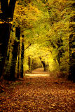 Autumn colors in the forest. With trees Royalty Free Stock Photo