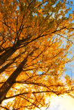 Autumn colors of the forest Stock Photography