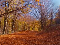 Autumn colors in the forest. Colorful forest in the fall Royalty Free Stock Images