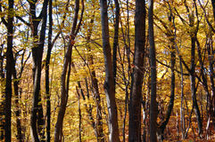 Autumn colors in the forest Royalty Free Stock Photography