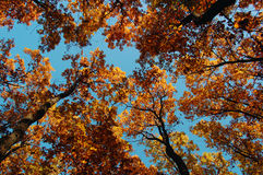 Autumn colors in the forest Royalty Free Stock Image