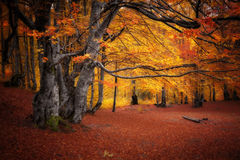 Autumn colors forest Stock Photo
