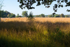 Autumn colors, forest and grass field Royalty Free Stock Images