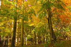 Autumn colors in the forest Stock Images