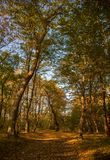 Autumn colors forest stock photography