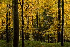 Autumn colors of a forest at mountain Goc Stock Photography