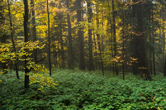 Autumn colors of a forest at mountain Goc Royalty Free Stock Photo