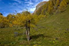 The solitary tree broken by the wind d`autunno royalty free stock image