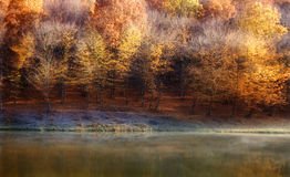 Autumn colors on a forest near a lake Royalty Free Stock Photos