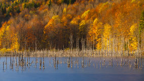 Autumn colors in a forest near a mountain lake Stock Image