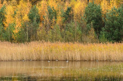 Autumn colors in forest over water Royalty Free Stock Image