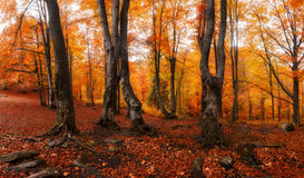 Autumn colors forest Royalty Free Stock Image