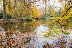 Autumn colors in forest with pond Stock Image