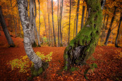 Autumn colors forest Royalty Free Stock Photo
