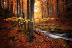 Autumn colors forest Stock Image