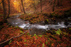 Autumn colors forest Stock Images