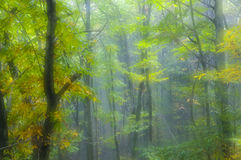Autumn colors in the forest Soft focus Royalty Free Stock Photos