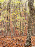 Autumn colors in the forest Stock Photo
