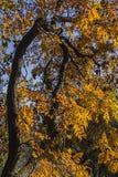 Autumn Colors - forme differenti Fotografia Stock Libera da Diritti