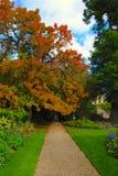 Autumn colors. An autumn garden in Cambridge Royalty Free Stock Images