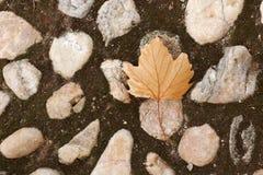 Autumn Colors Gefallene Blätter Stockfoto