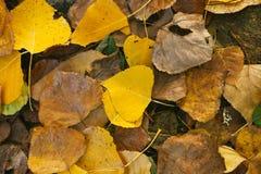 Autumn Colors Gefallene Blätter Stockfotos