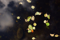 Autumn Colors Gefallene Blätter Lizenzfreies Stockfoto