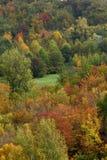 Autumn colors. Stock Images
