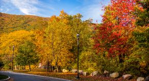 Autumn colors. Gold and red Royalty Free Stock Images