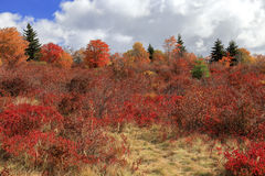 Autumn Foliage at Graveyard Fields Royalty Free Stock Image