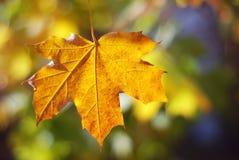 Autumn Colors Herbstlaub in den Herbstfarben und in bokeh Lichtern Fall Stockfotos