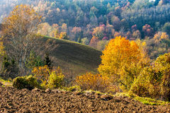 Autumn colors on the hill Stock Image