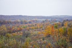 Autumn Colors Hill Forest Landscape royalty free stock photography