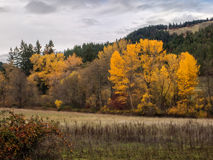 Autumn colors in the hills of Oregon Stock Photography