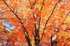 Autumn Colors i Arkansas Royaltyfria Foton
