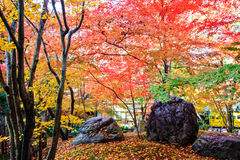 Autumn Colors i den Eikando templet, Kyoto, Kansai, Japan Arkivbild