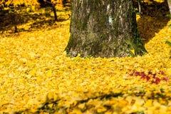 Autumn Colors i den Eikando templet, Kyoto, Kansai, Japan Arkivfoto