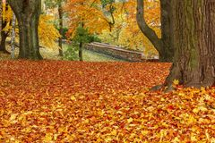 Autumn Colors In Park Royalty Free Stock Photo