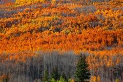 Autumn colors at its peak Stock Photos