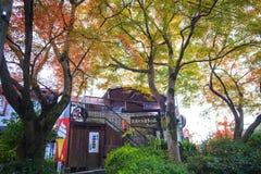 Autumn Colors in Japan, Beautiful autumn leaves Stock Photos