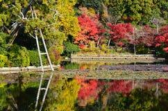 Autumn colors of Japanese garden, Kyoto Japan. Stock Photos