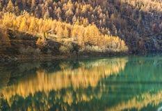 Antrona Valley - Lake Alpine Horse Royalty Free Stock Image