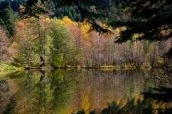 Autumn colors at the lake Stock Photos