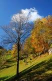 Autumn colors landscape Royalty Free Stock Photo